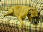 """Champ on his """"throne"""""""