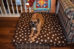 BOXERS QUILT RETREAT